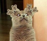 Фракталы - кошкак в ухе