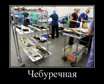 Кухня в среднестатистической чебуречной / шаверме