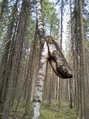 Никогда не здавайся, дерево!